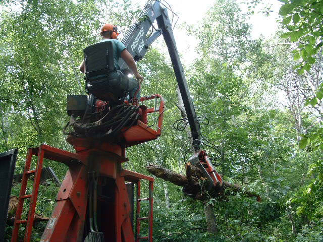 How To Choose The Right Tree Service and Lawn Care Company