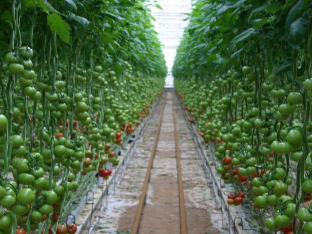 Farmland Investment Advice